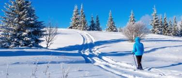 Cross Country Ski Image